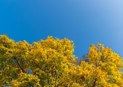 Himmel & Bäume